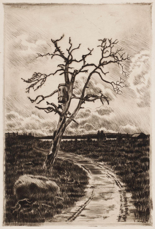 Kuihtunut puu