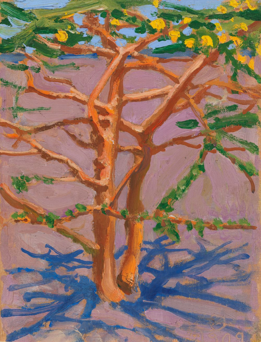 Akaasiapuu aavikolla