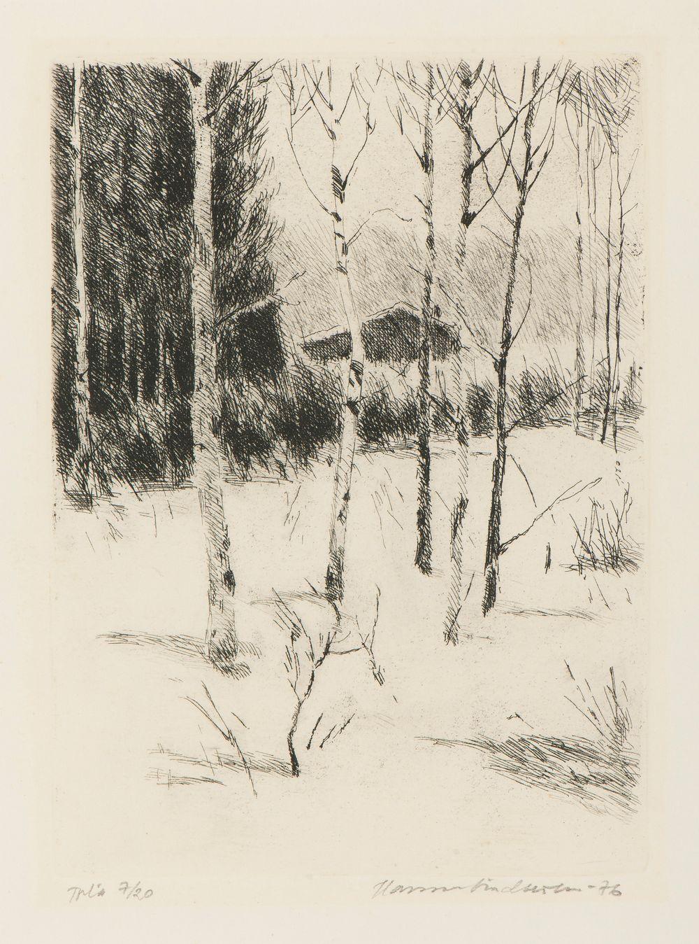 Nuoria koivuja talvella