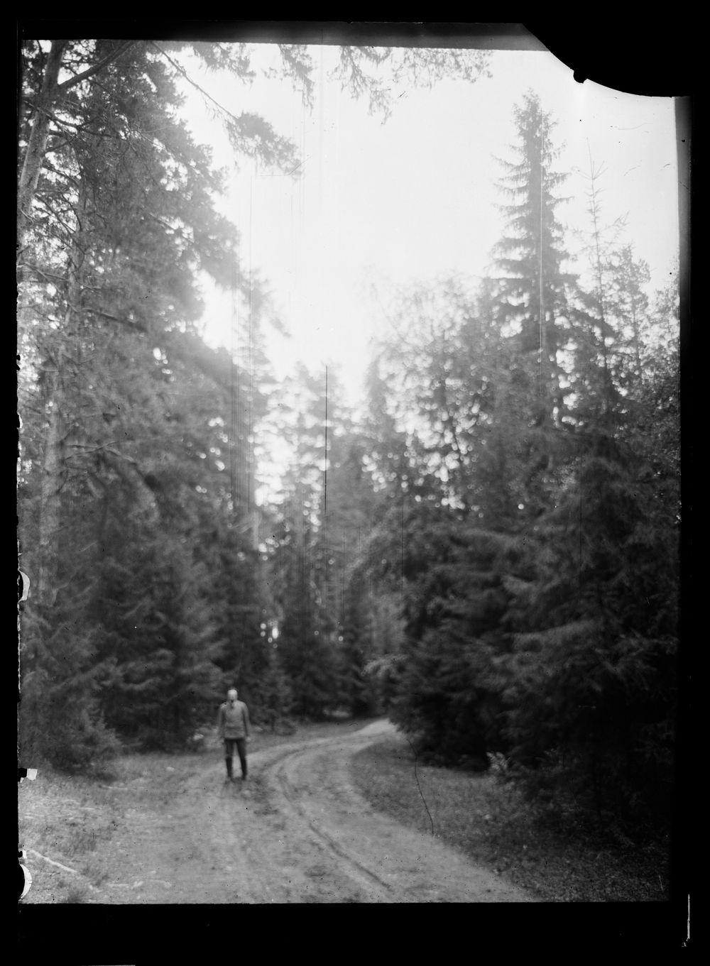 Mies metsätiellä