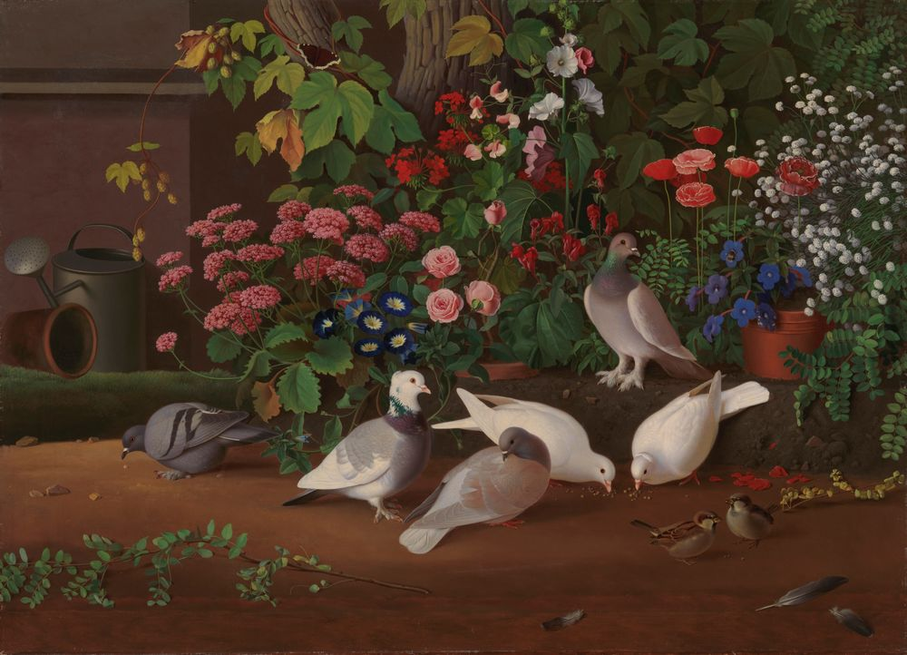 Kukkia ja lintuja puutarhan nurkassa