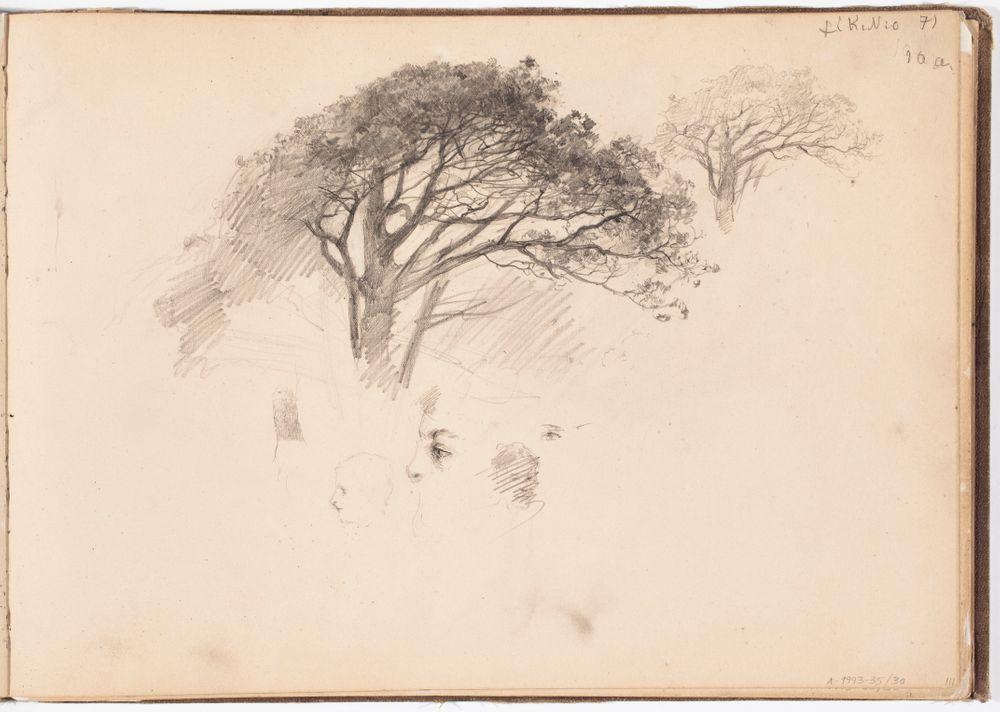 Tuuhealatvainen puu, kaksi harjoitelmaa. Todennäk. 1880-luvun jälkipuol.