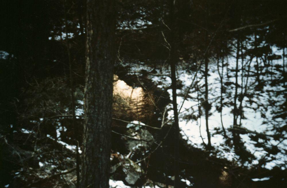 Metsäretki 1.1.1991