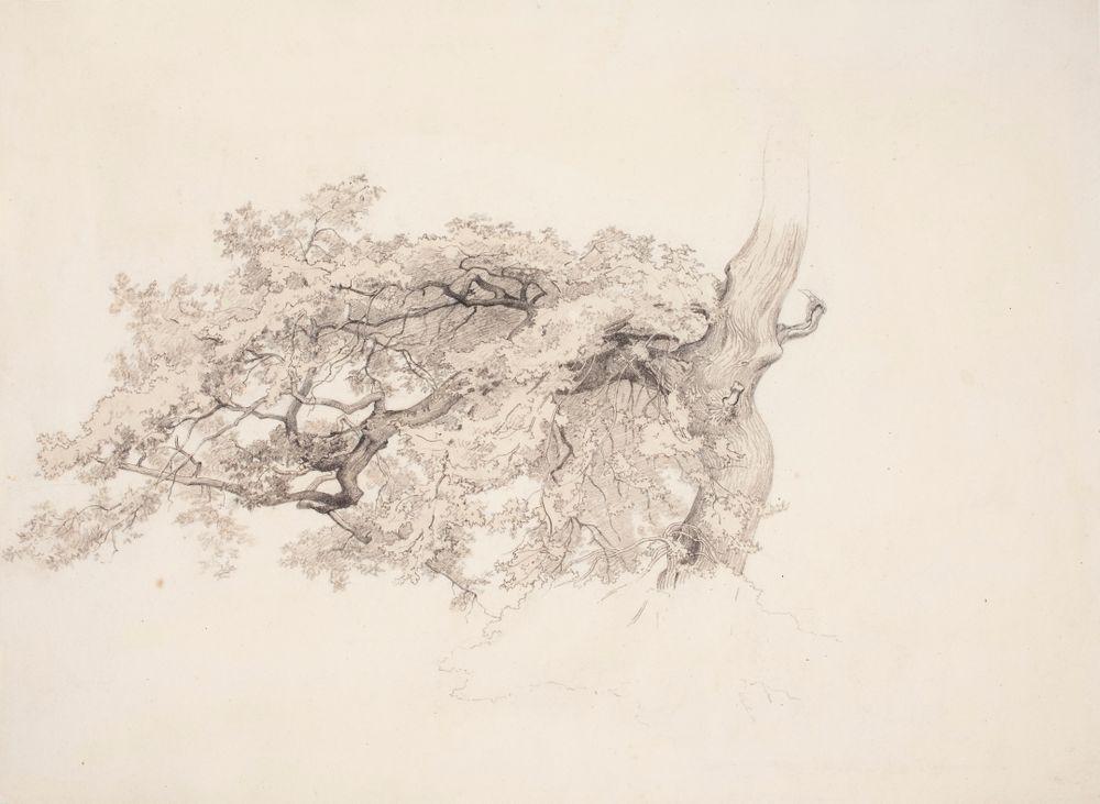 Lehtipuun oksa ja osa runkoa