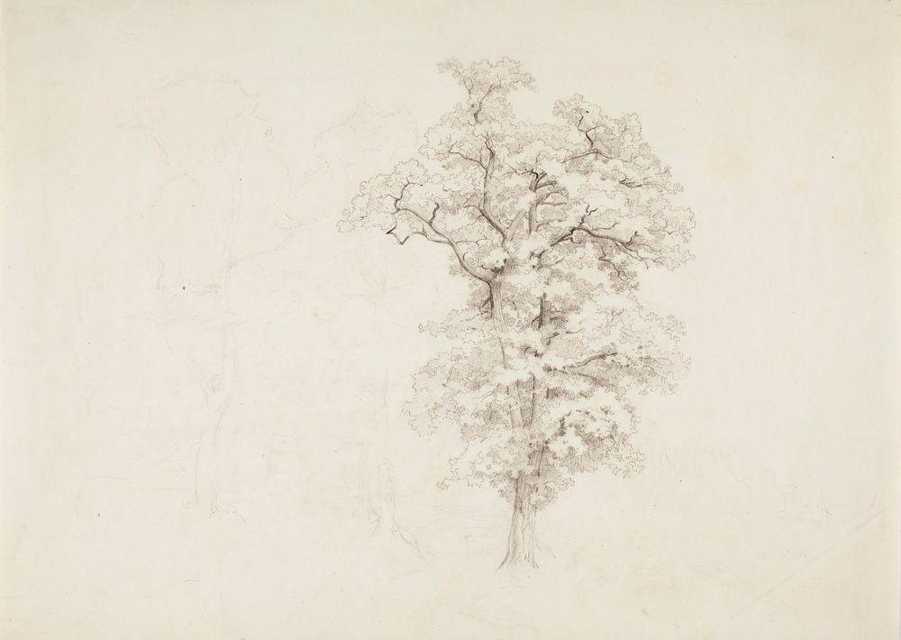 Lehtipuu ja kaksi himmeästi luonnosteltua puuta sen vasemmalla puolella