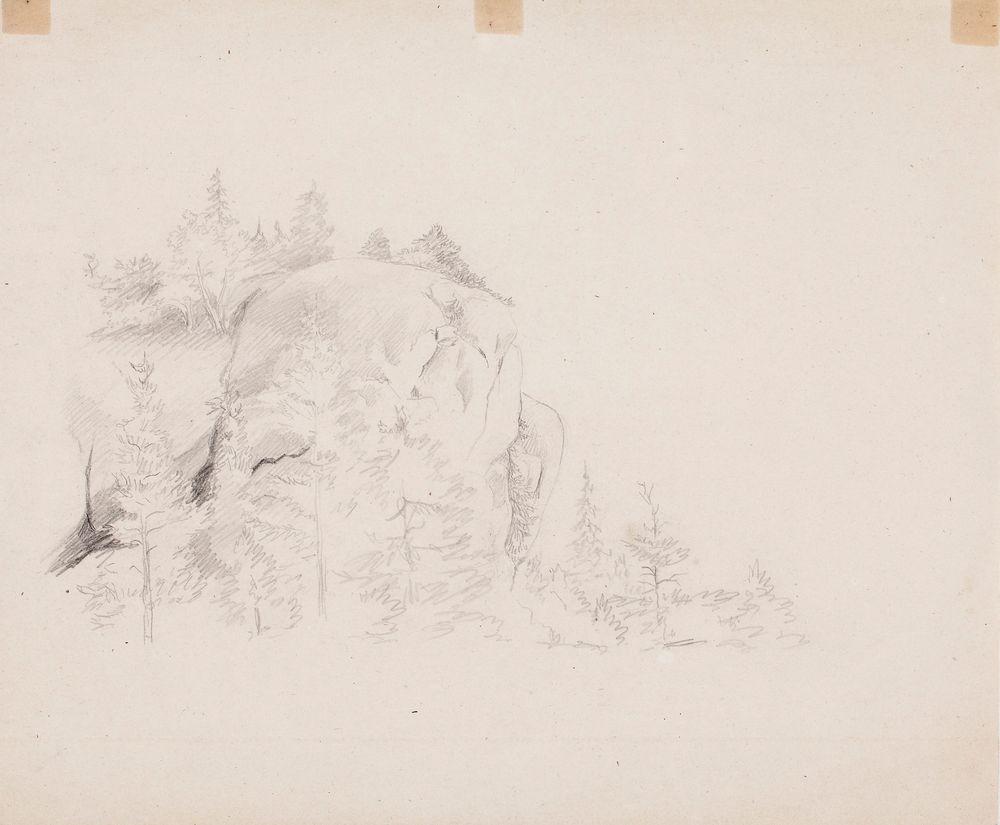 Jyrkkä kallio, jonka alapuolella matalia kuusia