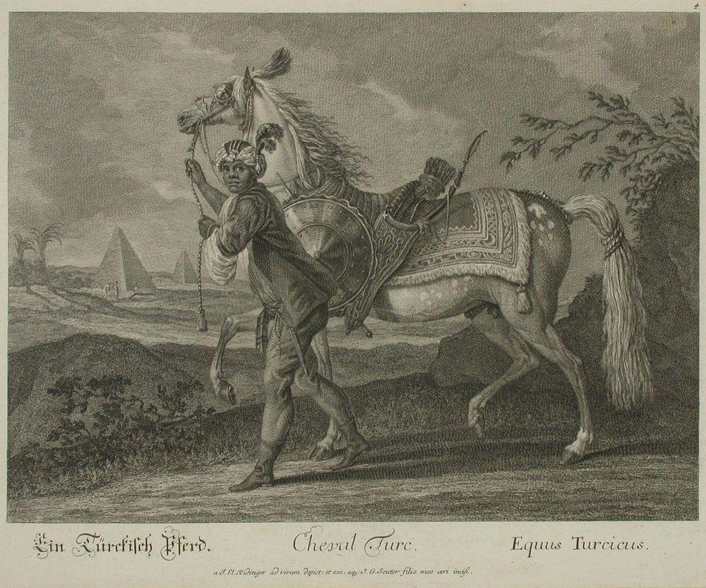 Turkkilainen hevonen