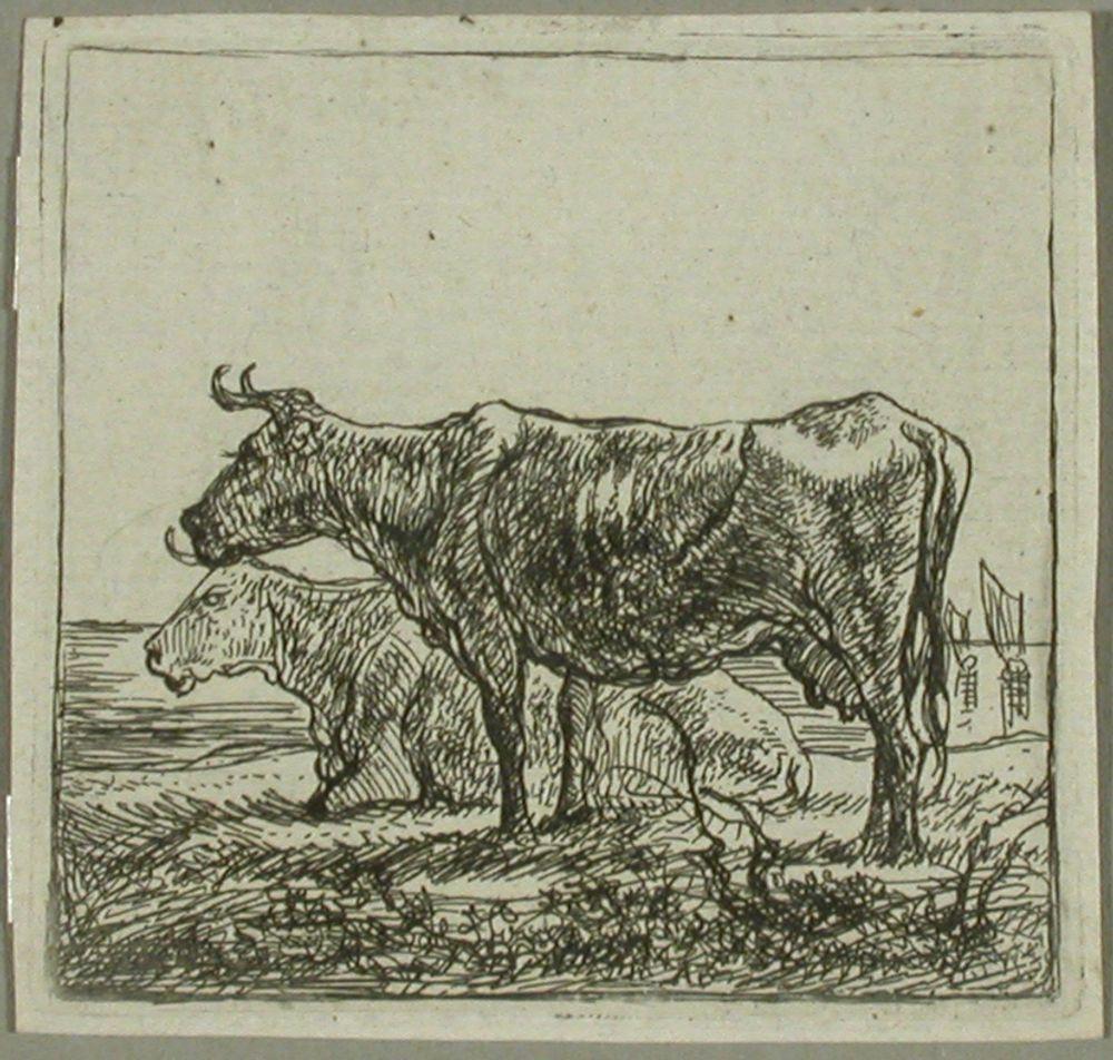 Kaksi lehmää meren rannalla