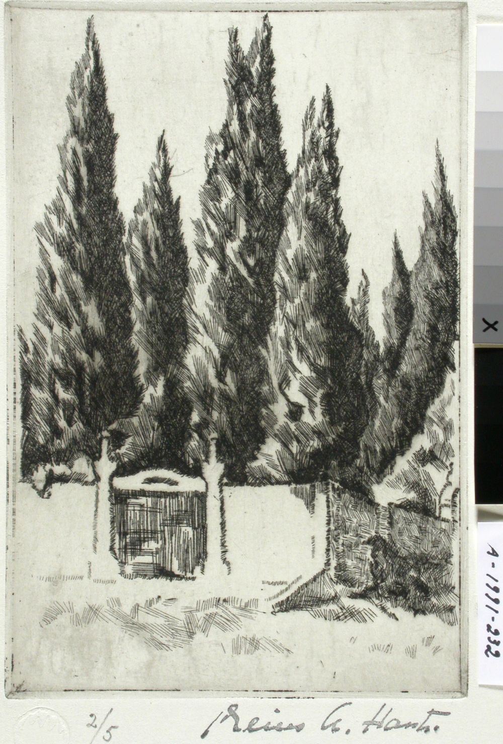 Sypressejä (Firenze)