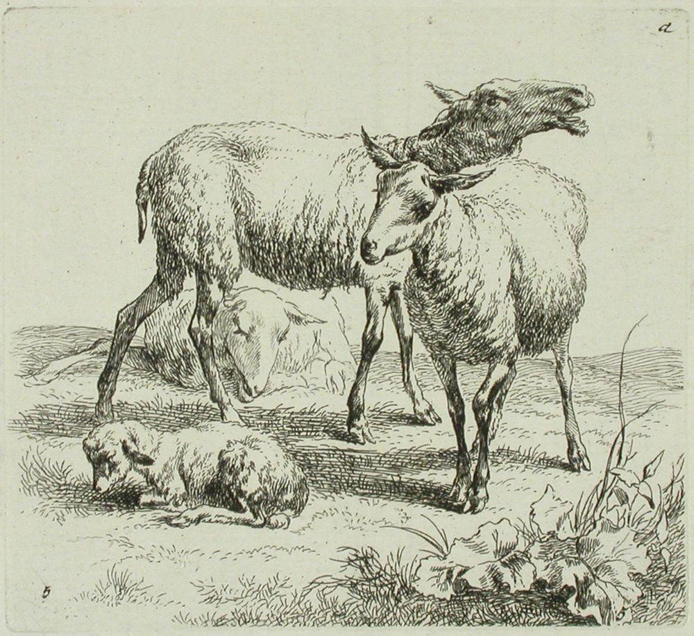 Kolme lammasta ja karitsa