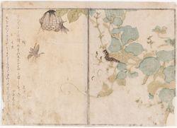 Toukka ja mehiläisiä