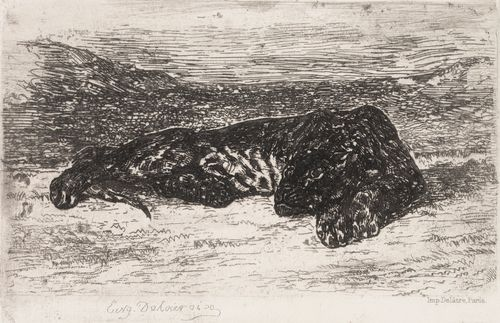 Nukkuva tiikeri autiomaassa