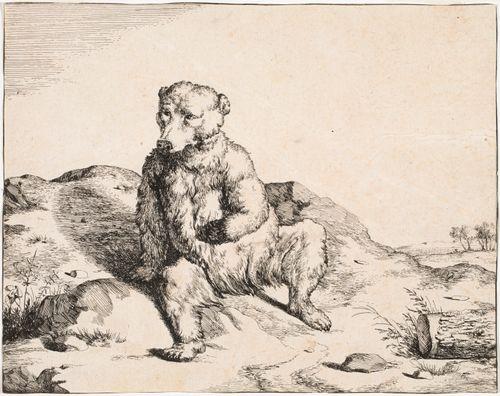Istuva karhu edestä
