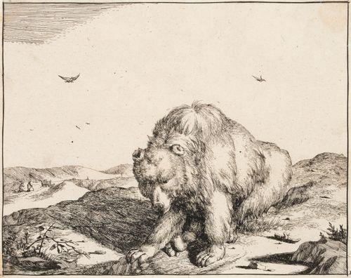 Etujalkaansa nuoleva karhu