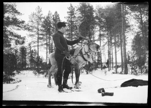 Werner Åström ja poro