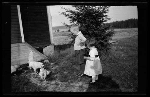 Tom ja Uhra Simberg seuraavat kukkojen ruokailua