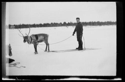 Werner Åström suksilla ja poro