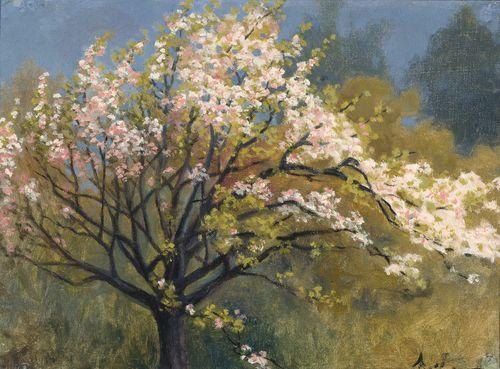 Kukkiva hedelmäpuu