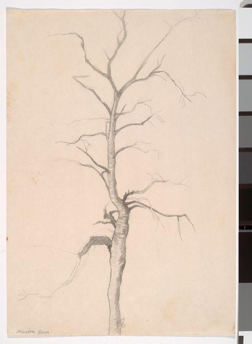 Alaston puu