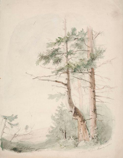 "Merimaisema ""Nagu-Hafverö-Norrby"" ; Puita meren rannalla"