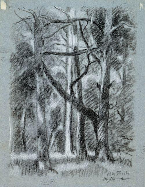 Metsämaisema Urajärveltä