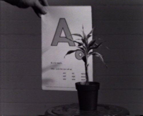 Aakkosten opettamista kasville