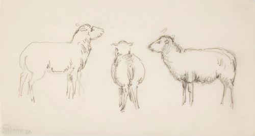 Kolme lammasta