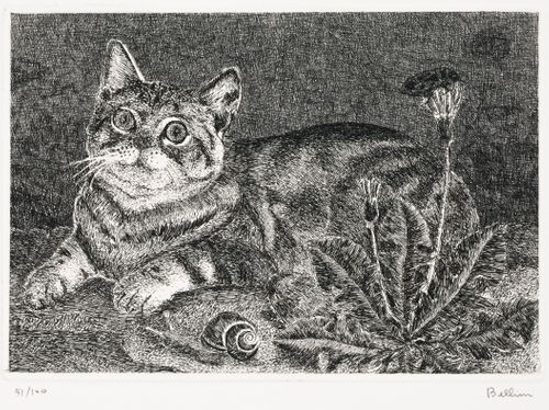 Kissa, voikukka  ja etana