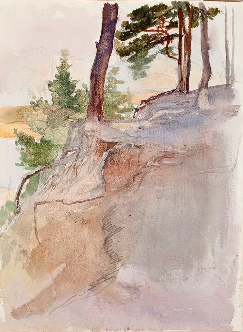 Rantamaisema, puun juurakko