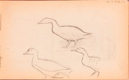 Lintuja, luonnos