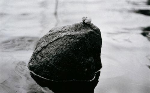 Oktober. Vinbergssnäckan Silence ser ut över vattnet och sjunger en tyst sång om sin längtan till Versailles