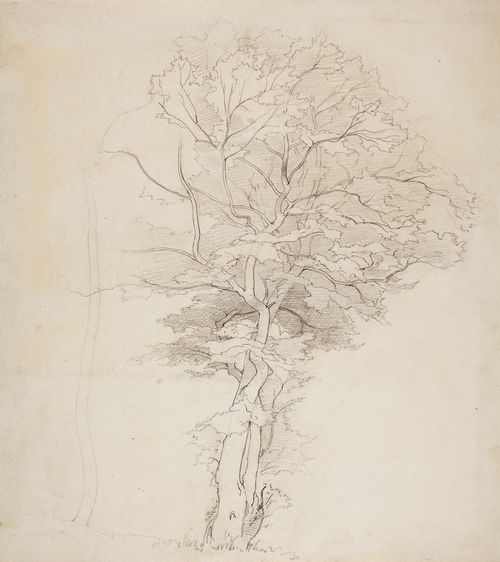 Lehtipuu, vasemmassa reunassa paljas puunrunko.