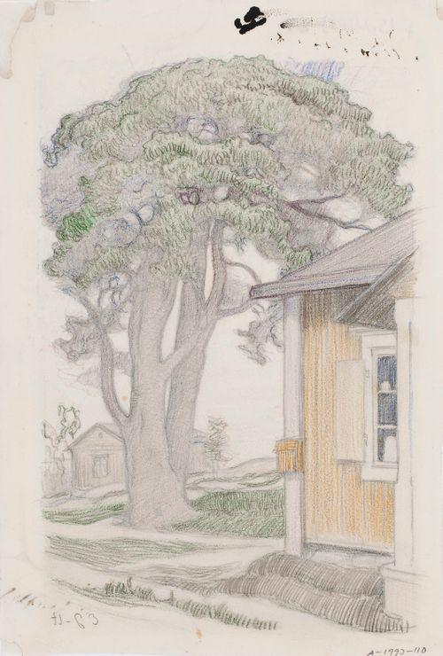 Pihapuu (Tuomaalan mänty)