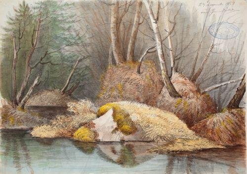 Keväinen metsänsisus ja vedensaartamat mättäät