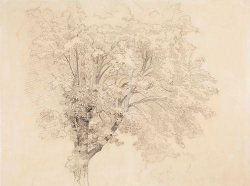 Lehtipuun latvus