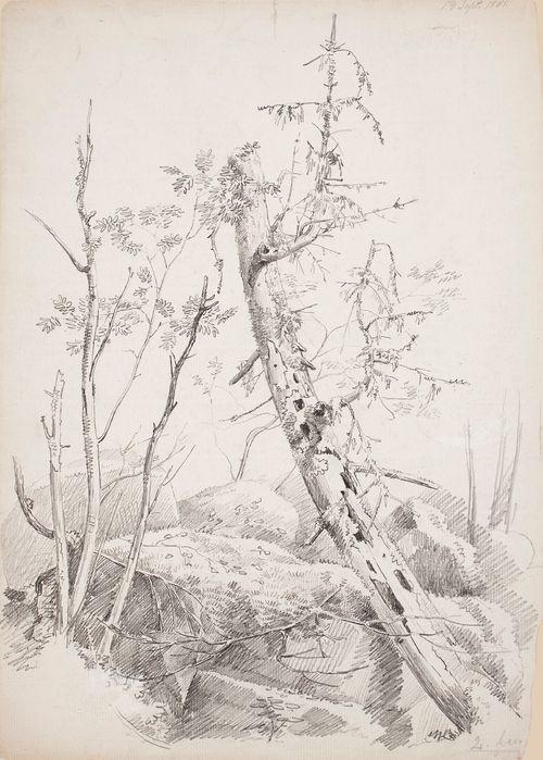 Harjoitelmia puista ja kivistä