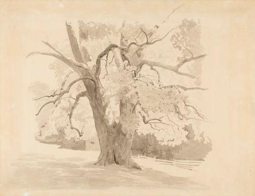 Vanhan lehtipuun alaosa