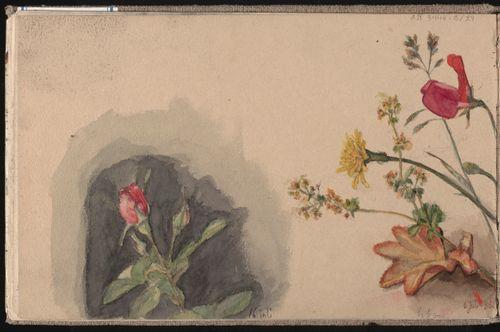 Ruusu, Kedonkukkia ja hajuherne