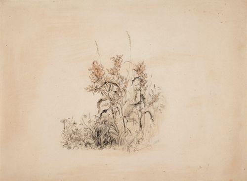 Kukkia ja heinänkorsia