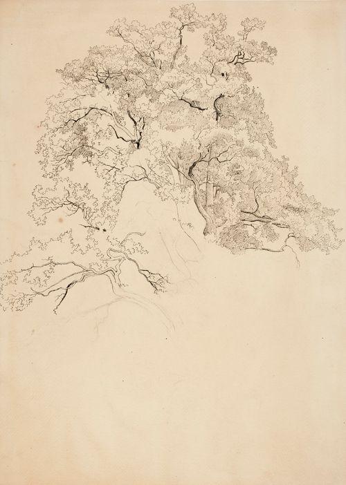 Lehtipuun latva ; piirustuksen alaosa keskeneräinen