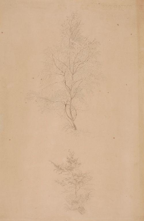Kaksi harjoitelmaa, toinen nuoresta lehtipuusta ja toinen pensaasta