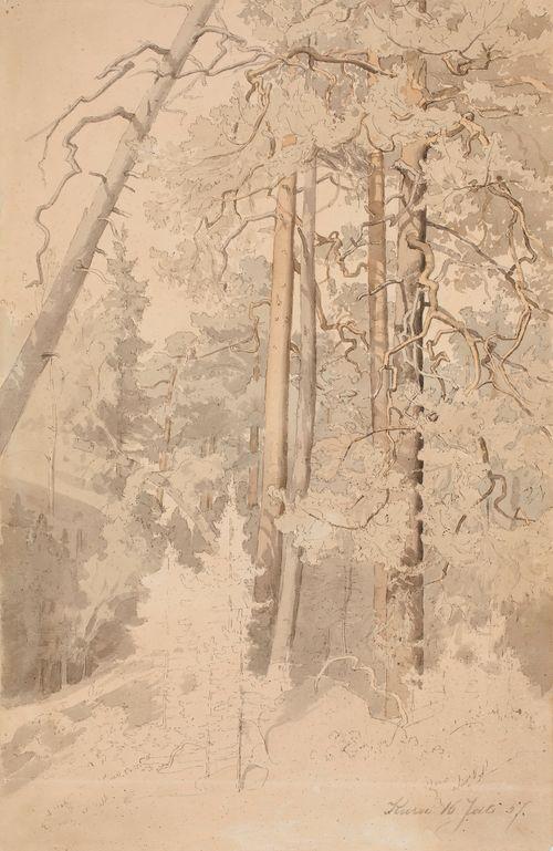 Metsänsisusta, Kuru