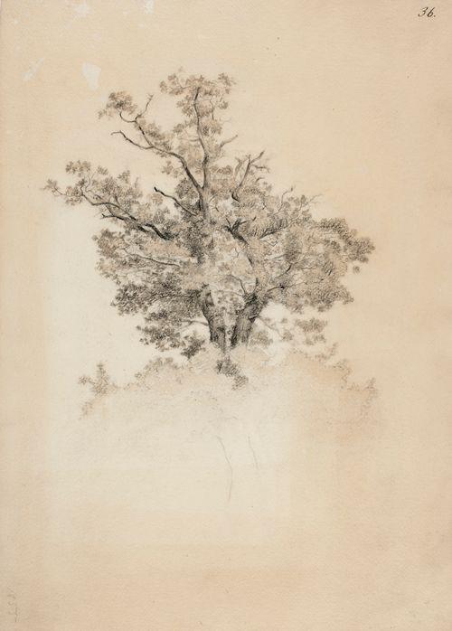 Vanhan lehtipuun latva