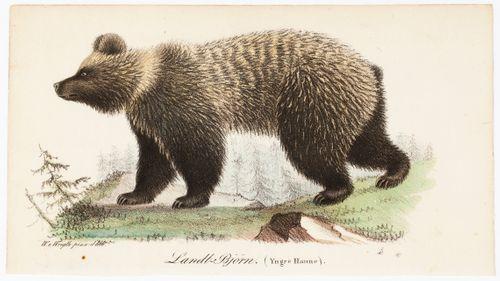 Nuori uroskarhu, Tidskrift för jägare och naturforskare -lehden (nro 4/1832) kuvitusta