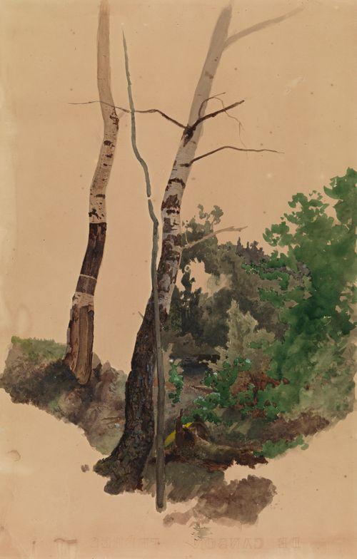 Kaksi paljasta koivunrunkoa ja pensaita