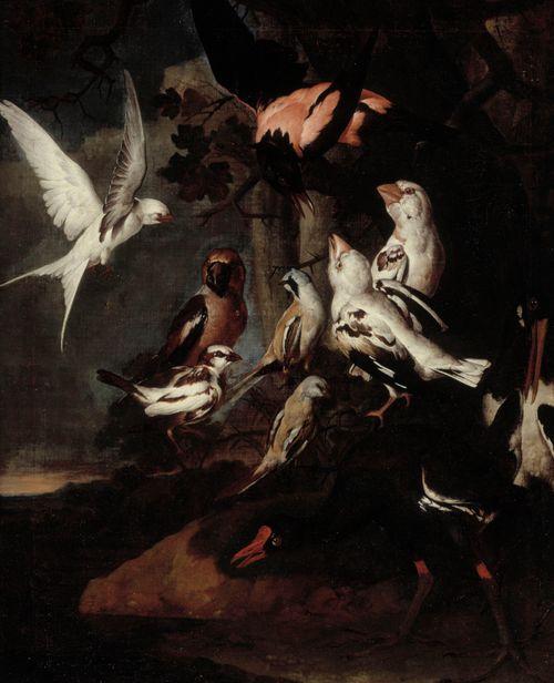 Eksoottisia lintuja