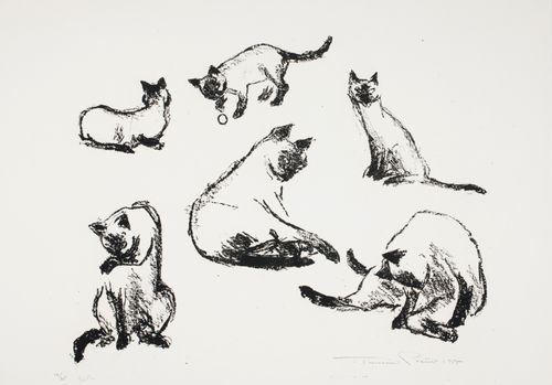 Siamilaisia kissoja