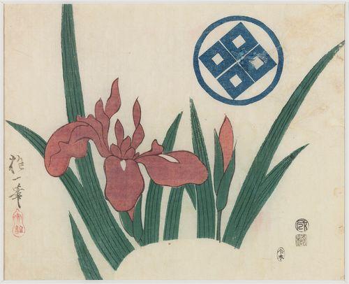Iiriksen kukka viuhkan kuviona. Kacho-ga(Kuvia kukista ja linnuista)