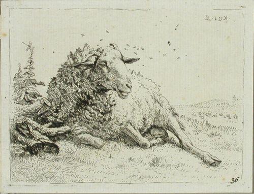 Lammas puunjuurakon vieressä