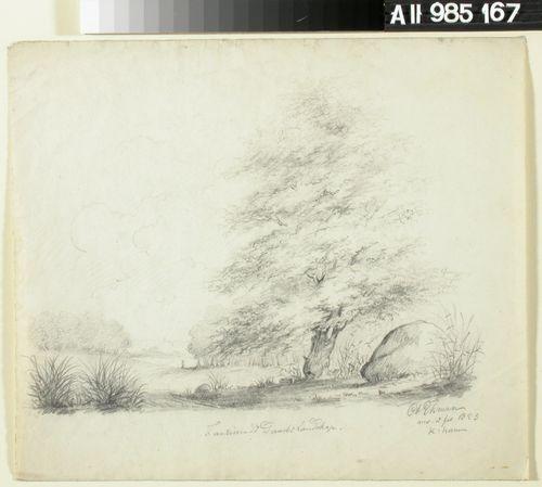 Maisema, jossa vasemmalla tie ja etualalla oikealla iso puu